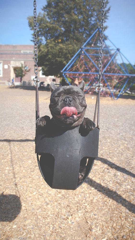 Ludoteche Per Cani Felici Natural Line