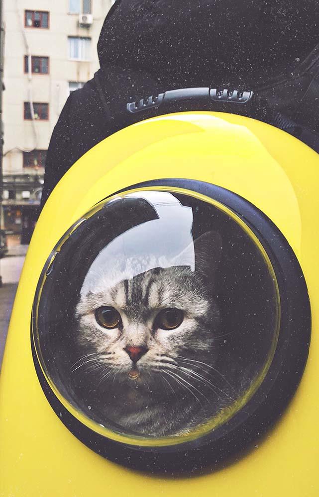 gatti in vacanza senza stress