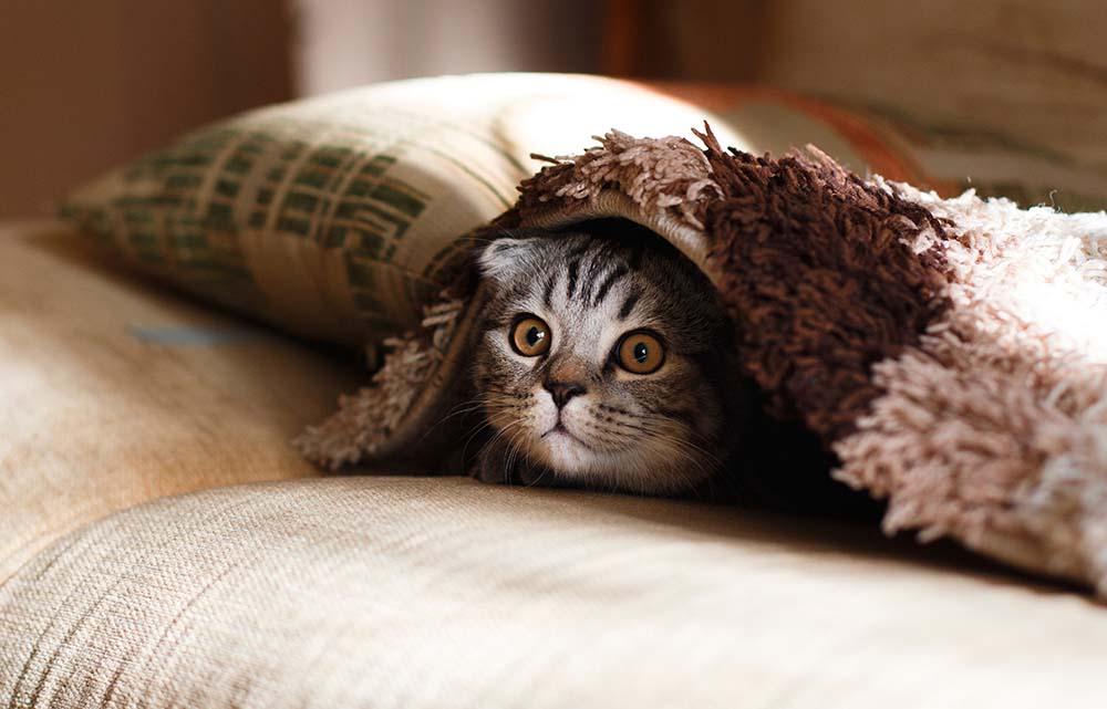 gatto in vacanza senza stress