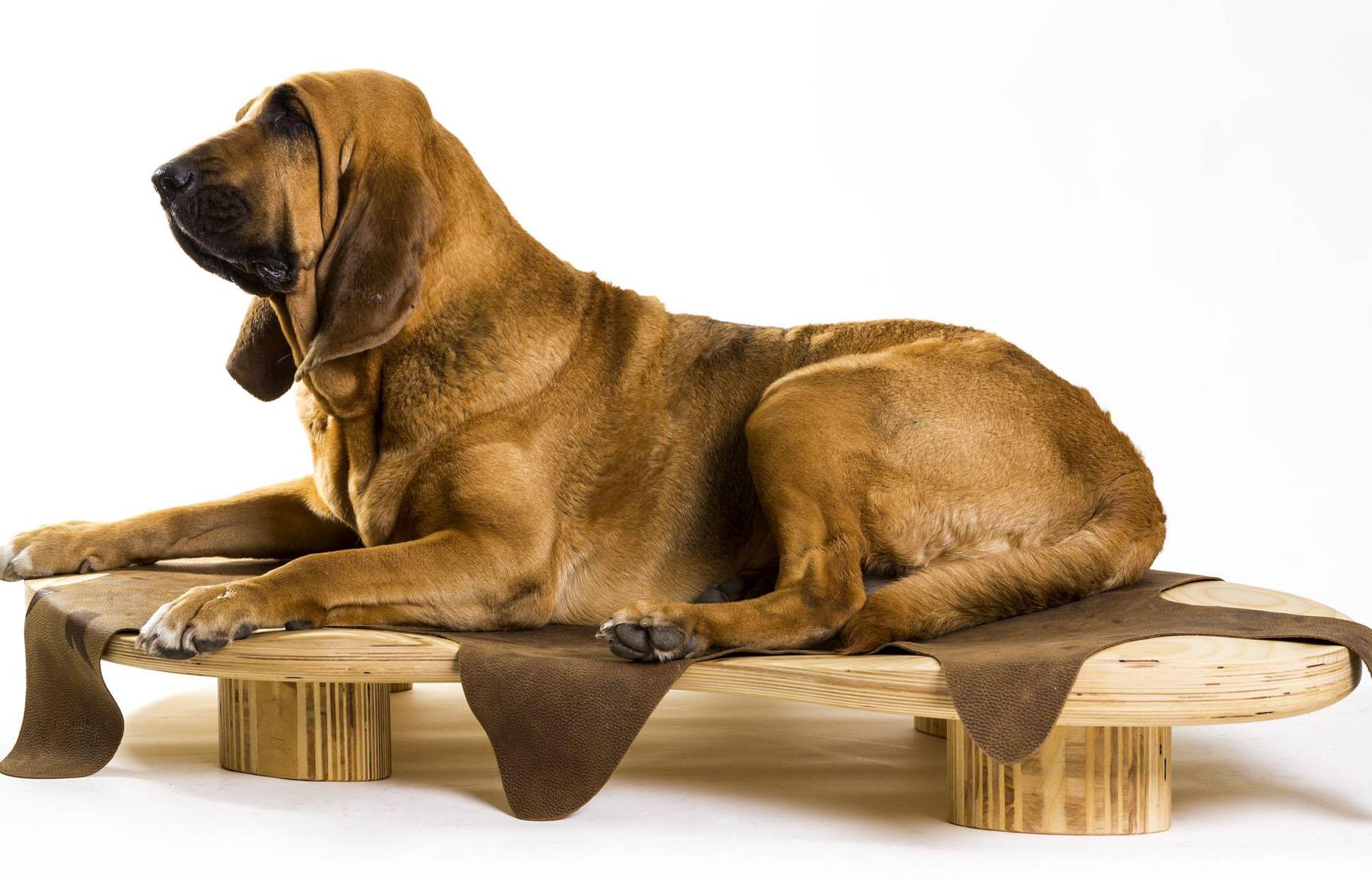 Cucce Design Per Cani dune, la cuccia di design - natural line