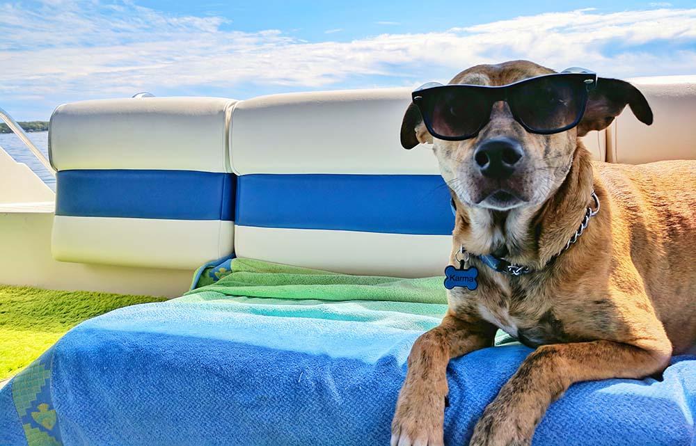 cane in vacanza senza stress