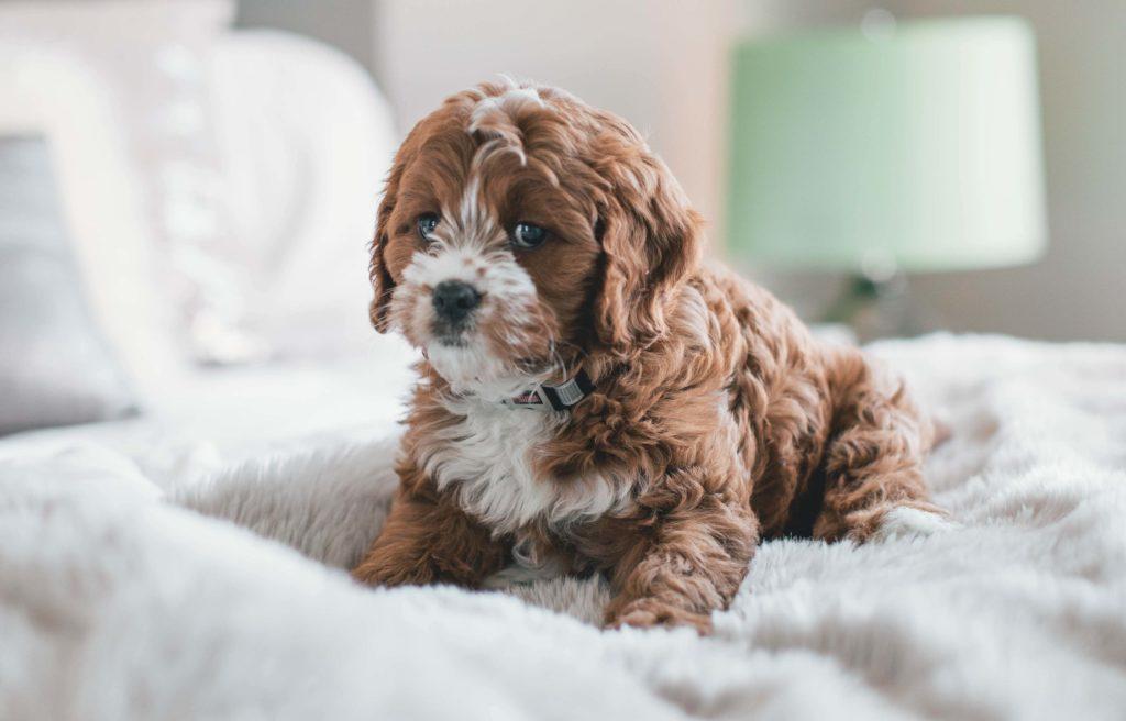 tappetino igienizzante cane
