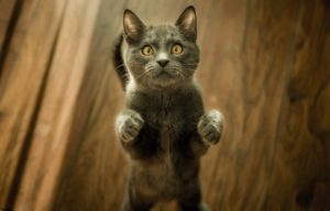 comunicazione del gatto
