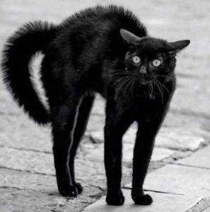 Gatto con coda gonfia e schiena inarcata