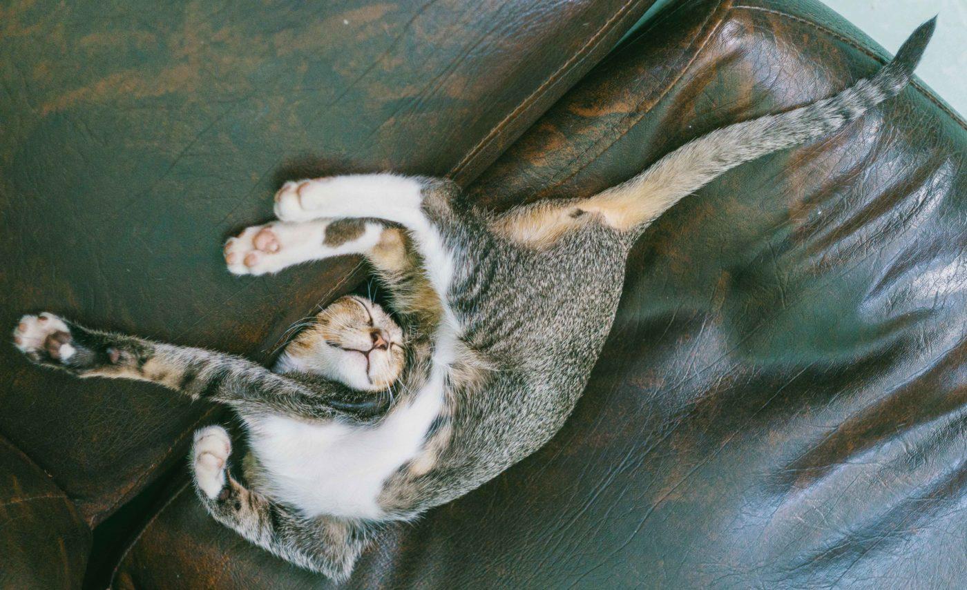 gatto-snodato-yoga