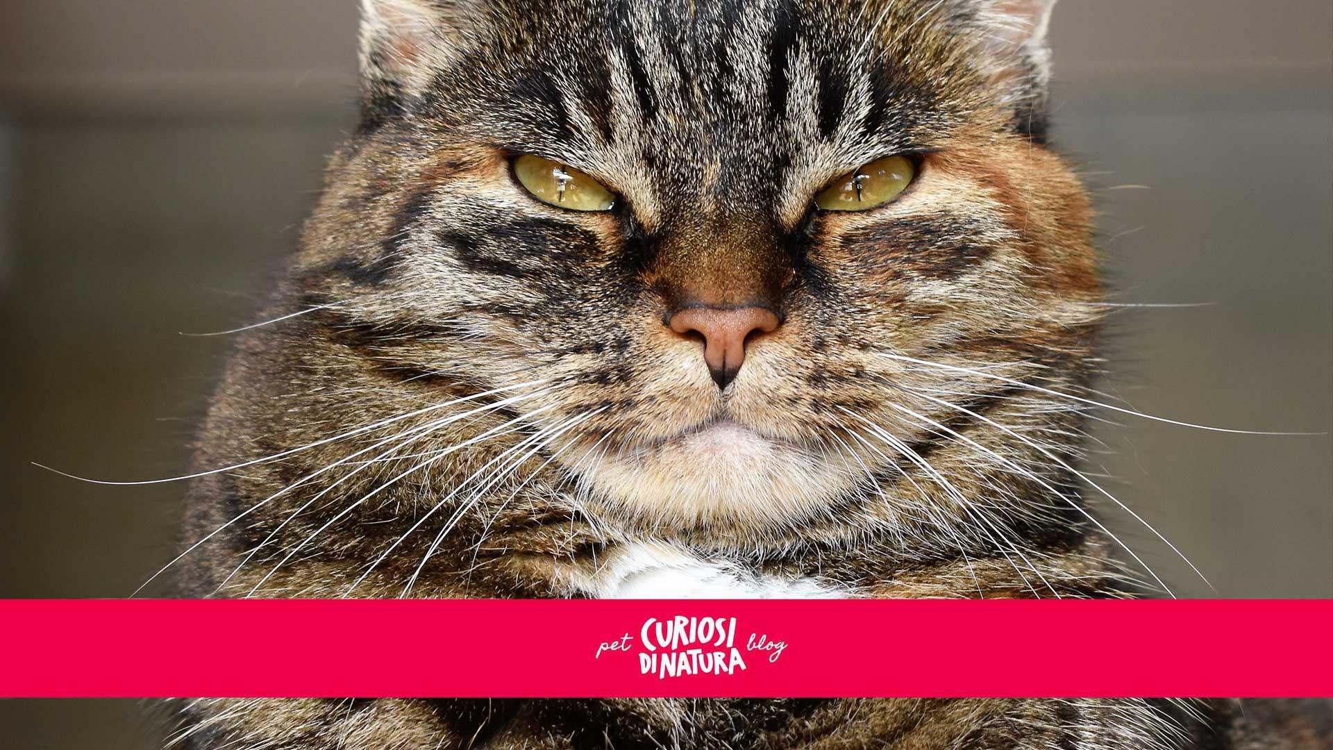i baffi dei gatti a cosa servono