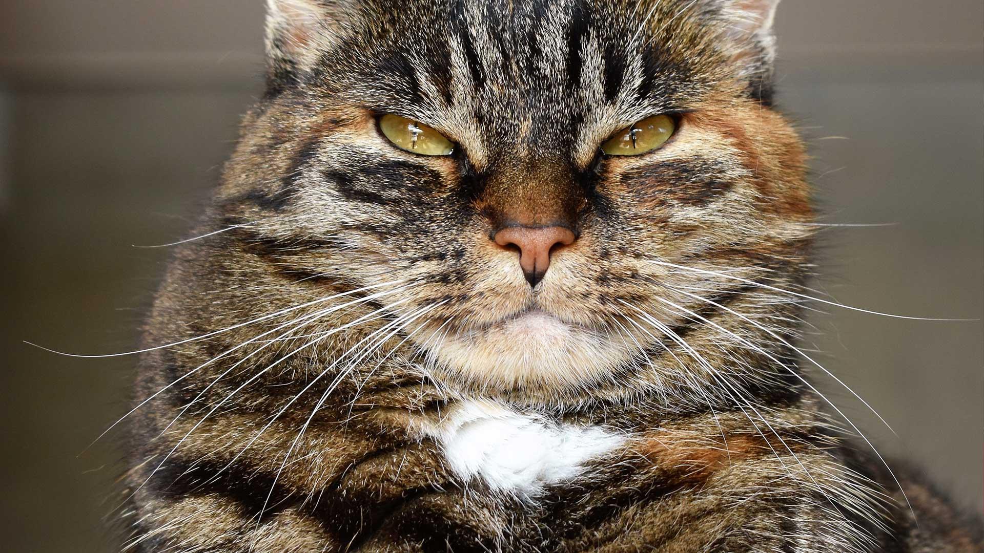 A cosa servono i baffi dei gatti? Tutto sulle vibrisse