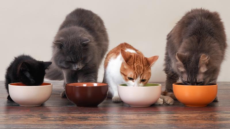 I benefici (che non conoscevi) della carne di maiale per cane e gatto
