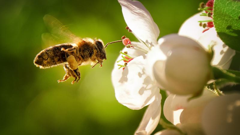 Le api, l'ambiente e gli animali