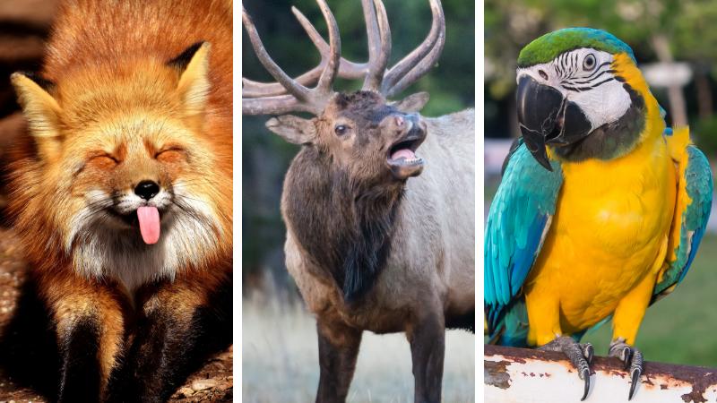 Sai quale animale bramisce? I versi più curiosi degli animali