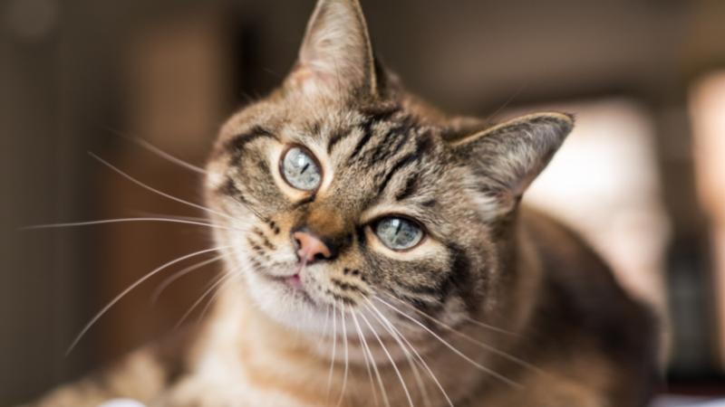 Perché si dice che i gatti anni 9 vite?